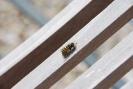 Wespenbilder